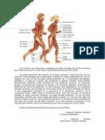 Funcion de Los Musculos Superficiales