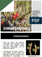 3era Clase Gimnospermas 2016 (8)