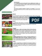 Tipos de Plantas Ornamentales y Algunos Beneficios