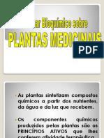 Plantas Medicinais 01.08.17