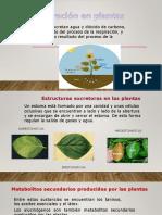 Presentación Excrecin en Plantas 7.5