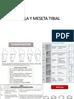 ROTULA Y TIBIA PROXIMAl