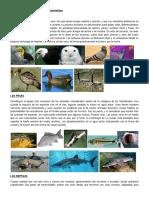 50 Animales Vertebrados y Sus Características