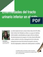 AV 32 Enfermedades Tracto Urinario en El Gato