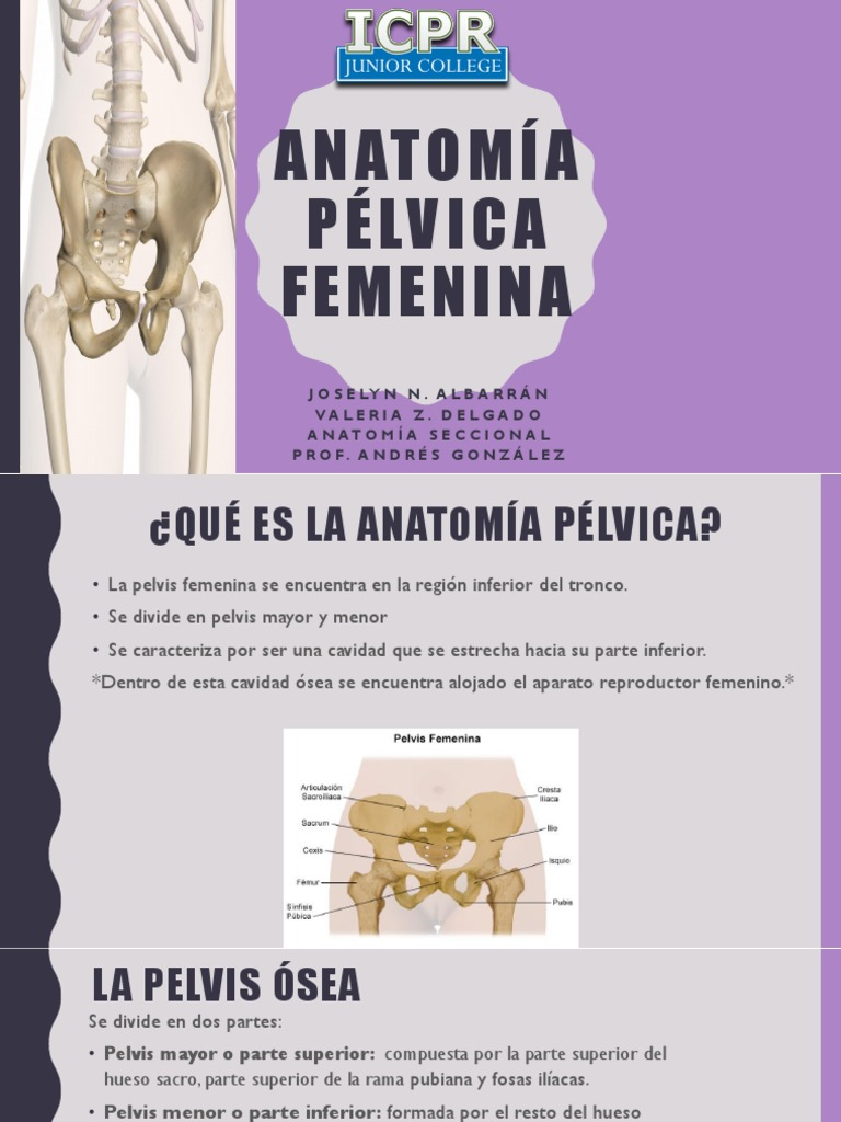 anatomia pelvica femenina pres 1