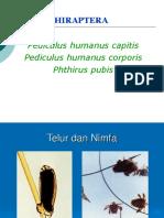 Prak Phtiraphthera Hemiphthera Siphonaptera Orthopthera