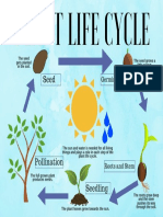 plant life cycle  2