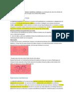 001.ISOMETRICO ISOTONICO.docx
