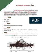 Grasshopper Dissection.docx