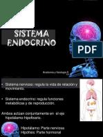 2.-ENDOCRINO.pdf
