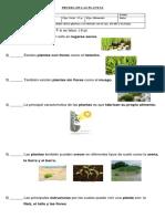Evaluacion Las Plantas Nº 1