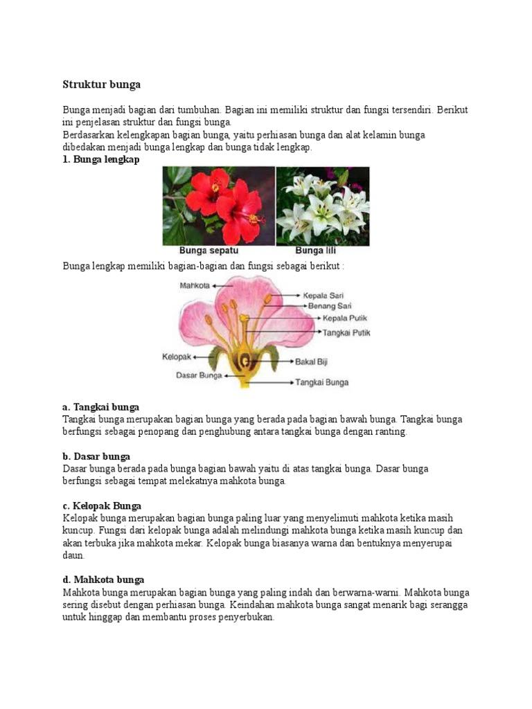 Gambar Bagian Bunga Sepatu Dan Cara Penyerbukannya Gambar Bunga