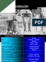 Anatomia de Rodilla[1]