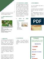 TRIPTICO-EXPERIMENTO.docx