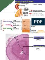 SUPRA RENAL 1 - Aldosterona, ADH e Pressão Arterial.ppt_0