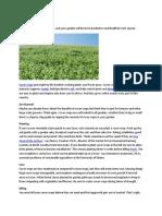 Cover Crop Basics