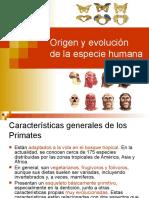 Origen Evolucion