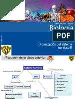 Clase 4 Organización Del Sistema Nervioso II 2016.PDF-1 (1)