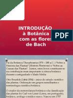 Introdução à botânica com os Florais de Bach