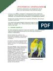 Standar Canarios Lipocromos.pdf