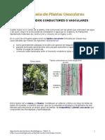 Plantas vasculares (Tejidos conductores 1)