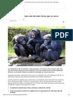 Por Que Os Chimpanzés São Tão Mais Fortes Que Os Seres Humanos - BBC Brasil