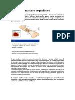 El Sistema Musculo Esquelético