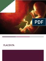 Placenta.