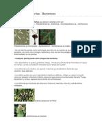 Bacterias en Plantas