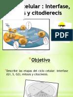 ciclo celular.ppt