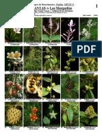 650_plantas_de_las_margaritas.pdf