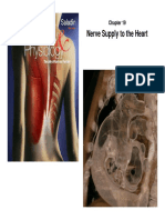 C19 4 Nerve Supply to Heart