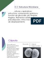 capsula.pdf