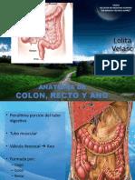 anatomacolonanoyrecto-120329133913-phpapp01.pptx