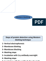 Western Blotting_lecture 2