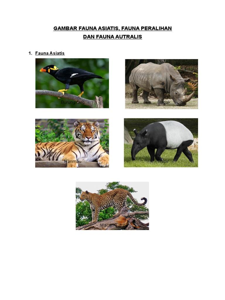 680+ Gambar Fauna Peralihan HD Terbaik