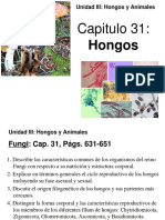 Cap. 31 Hongos