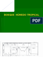 Bosque Humedo Tropical Flora