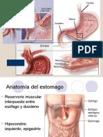 Enfermedad Acido Peptica 1220561933120465 8