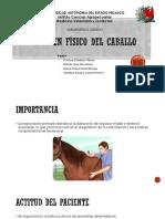 Examen Físico del caballo