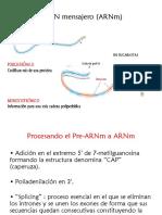 ARN mensajero (ARNm).pptx