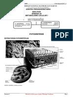 Jueves - Metabolismo Celular i