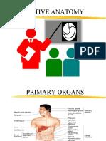 Digestion Anatomy