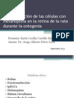 Caracterización de las células con melanopsina en la retina 2da evaluacion.pptx