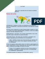 PARTES DE UNA FLOR.docx