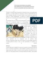 PRODUCTIVIDAD EN SISTEMAS GANADEROS.docx