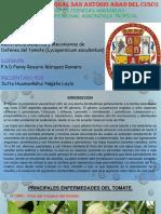 resistencia genetica del tomate expo.pptx
