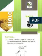4 Semilla 4