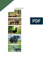 Gambar Fauna