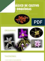 ORQUÍDEAS.pptx
